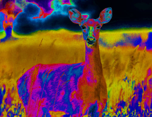 Thermal Imagers: Better And Cheaper Than Ever Before